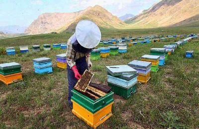 رونق تولید با شهد شیرین زنبورداری در طارم