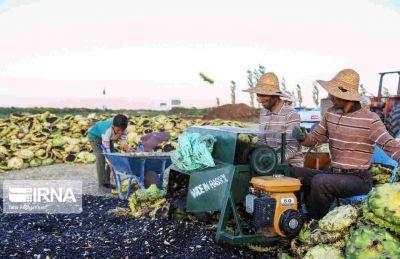 معاون ساماندهی صندوق کارآفرینی امید؛ ۲۶ هزار فرصت شغلی برآیند اجرای طرحهای روستایی در ۲ سال