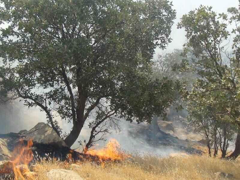 آتش سوزی منطقه «بولی» ایلام مهار شده است